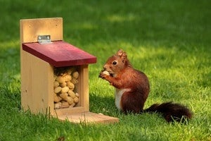 Weight Loss Tips: squirrel eating nuts